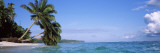 Palm Trees on the Beach, Indonesia Wall Decal by Panoramic Images