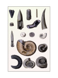 Shells: Cephalopoda Wall Decal by G.b. Sowerby