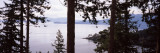 Trees at the Seaside, Teddy Bear Cove, Chuckanut Bay, Skagit County, Washington State, USA Wall Decal by  Panoramic Images