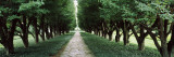 Trees in a Garden, Niagara Parks Commission, Niagara Falls, Ontario, Canada Wall Decal by Panoramic Images