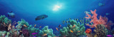 School of Fish Swimming Near a Reef, Indo-Pacific Ocean Vinilo decorativo por Panoramic Images