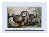 Battle Between the Great Boa and a Tiger Wall Decal by J.h. Clark