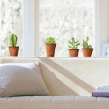 Kaktus Naklejka na okno