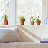 Cactus  (Window Decal) Wall Decal