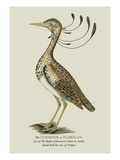 The Curmoor Wall Decal by J. Forbes