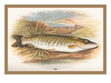 Pike Wall Decal by A.f. Lydon