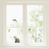 Budgerigars and Cat Window Decal Sticker - Pencere Çıkartmaları