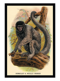 Humboldt's Woolly Monkey Wall Decal by G.r. Waterhouse