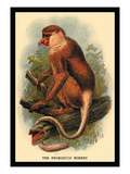 The Proboscis Monkey Wall Decal by G.r. Waterhouse