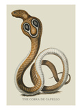 The Cobra de Capello Wall Decal by J. Forbes