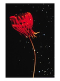 Jellyfish of Cape Hatteras Wall Decal by M. Youngbluth