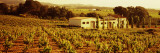 Farmhouses in a Vineyard, Penedes, Catalonia, Spain Wall Decal by  Panoramic Images