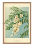 Acacia, Flower and Foliage Wall Decal by W.h.j. Boot