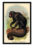 The White-Nosed Saki Wall Decal by G.r. Waterhouse
