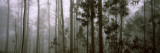 Trees in a Misty Forest, Madeira, Portugal Wall Decal by  Panoramic Images