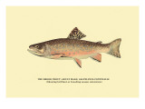 The Brook Trout, Showing Brilliant or Breeding Season Coloration Wall Decal by H.h. Leonard