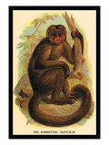 The Bonnetted Capuchin Wall Decal by G.r. Waterhouse