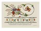 Taje-Mahal, or Crown of the Seraglio Wall Decal by J. Forbes