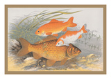 Golden and Bronze Carp Wall Decal by A.f. Lydon