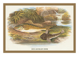 Ruffe and Miller's Thumb Wall Decal by A.f. Lydon