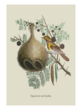 Sparrow of India Wall Decal by J. Forbes