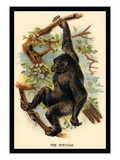 The Gorilla Wall Decal by G.r. Waterhouse