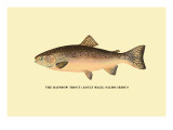 The Rainbow Trout Wall Decal by H.h. Leonard