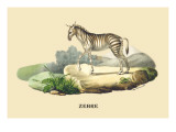 Zebre Wall Decal by E.f. Noel