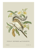 Indian Squirrel and Tamarind Wall Decal by J. Forbes