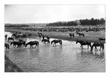 Horses Crossing the River at Round-Up Camp Wall Decal by L.a. Huffman