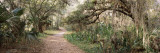 Trail in a Park, Paynes Prairie Preserve State Park, Micanopy, Alachua County, Florida, USA Wall Decal by  Panoramic Images