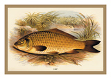 Carp Wall Decal by A.f. Lydon