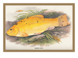Golden Tench Wall Decal by A.f. Lydon