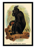 The Celebean Black Baboon Wall Decal by G.r. Waterhouse