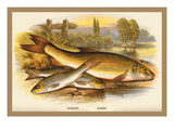 Gudgeon and Barbel Wall Decal by A.f. Lydon
