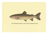 The Steelhead Trout Wall Decal by H.h. Leonard