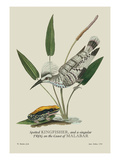 Spotted Kingfisher and a Singular Frog on the Coast of Malabar Wall Decal by J. Forbes