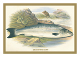 Grilse Wall Decal by A.f. Lydon