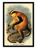 Erxleben's Guenon Wall Decal by G.r. Waterhouse