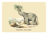 Elephant d'Inde Wall Decal by E.f. Noel
