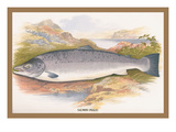 Salmon Wall Decal by A.f. Lydon