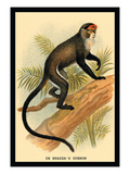 Debrazza's Guenon Wall Decal by G.r. Waterhouse