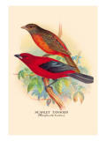 Scarlet Tanager Wall Decal by Arthur G. Butler