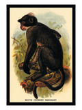 White Crowned Mangabey Wall Decal by G.r. Waterhouse