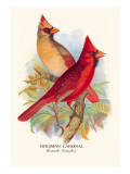 Virginian Cardinal Wall Decal by Arthur G. Butler