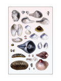 Shells: Sessile Cirripedes Wall Decal by G.b. Sowerby
