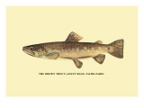 The Brown Trout Wall Decal by H.h. Leonard