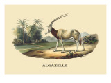 Algazelle Wall Decal by E.f. Noel