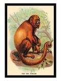 The Red Howler Wall Decal by G.r. Waterhouse