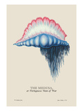 Medusa, or Portuguese Man of War Wall Decal by J. Forbes